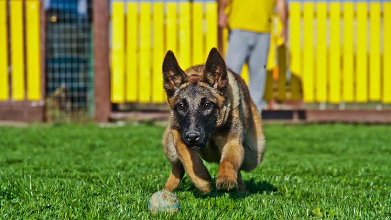 09afb1d66f24 Ποια είναι η κατάλληλη ηλικία για να εκπαίδευσω τον σκύλο μου ...